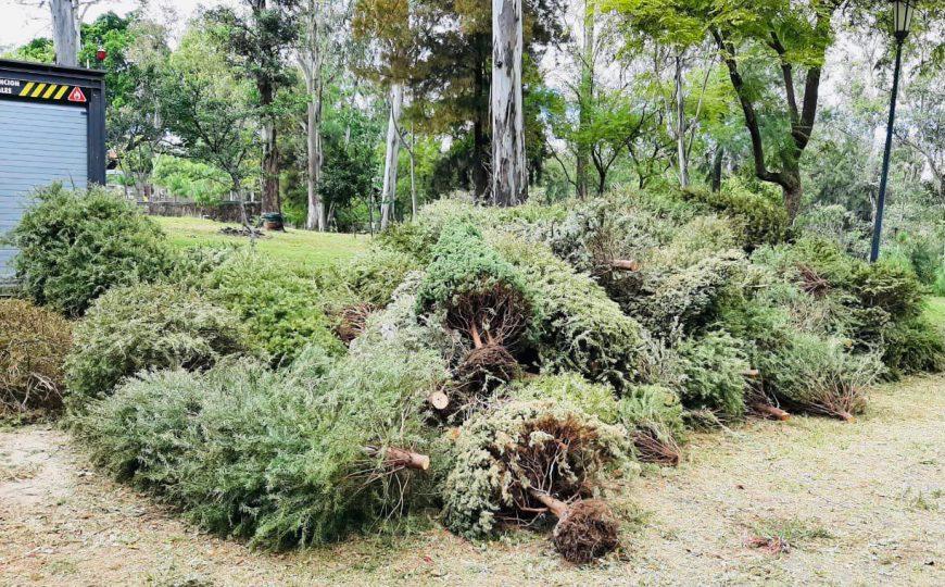 Tirar el árbol de navidad en la vía pública en Guadalajara está prohibido y se contempla una multa que va de los $12,151 a los $24,374 pesos