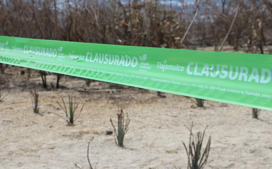 Clausura Fiscalía Ambiental de Tlajomulco plantío clandestino de agave en el bosque de la Primavera