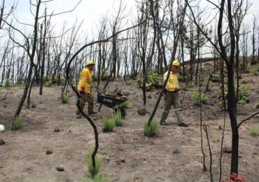 Se sigue trabajando en la conservación y restauración de suelos en el Bosque La Primavera