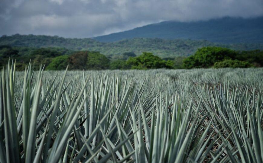 Jalisco conmemora la certificación responsable del Tequila