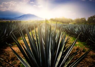 Certifican a Tequila como primer Destino Turístico Inteligente de México y América Latina